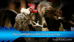 Play-Cockfighting-With-These-Easy-Tips